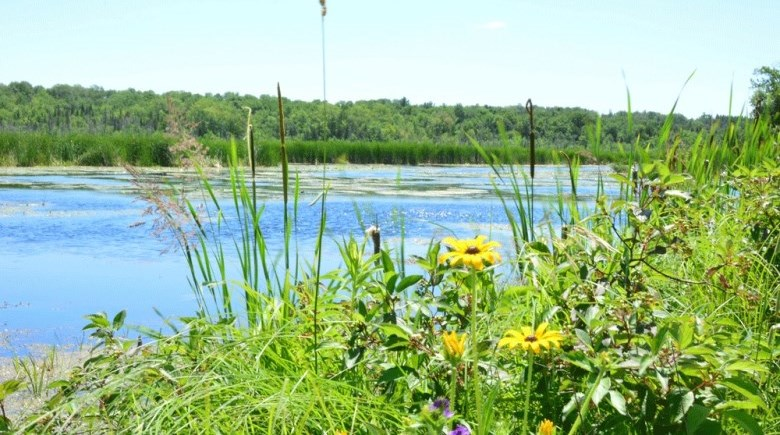 Picture of Beaver River Wetland