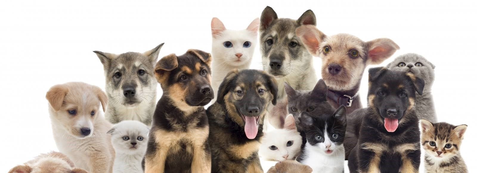Photo of dogs and cats